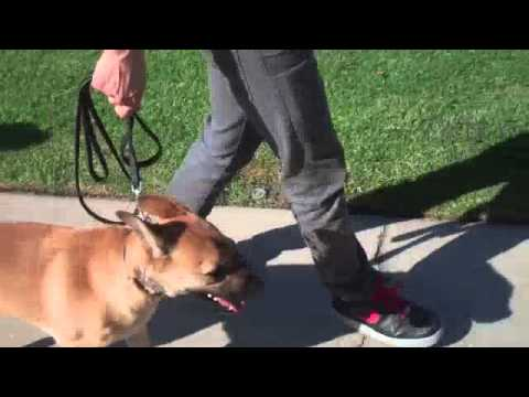 Learn To Train The Good Dog Way: The Walk - Dog Training tips!