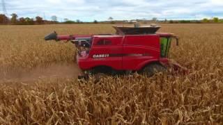 lange farms 2016 fall harvest case ih