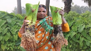 AMAZING HEALTHY COOKING Arum Root Recipe Farm Fresh Taro Root & Pangasius Fish Recipe Village Food
