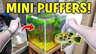 Adding MINI PUFFER FISH To Pla…