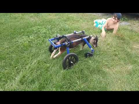 Roxy, wheels-learning curve part 2- independence!