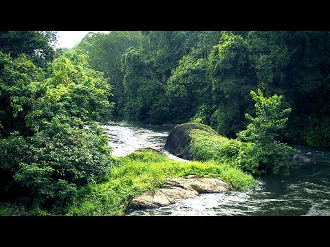 munnar untouched deep forest | the most beautiful place in india | Kerala tourism