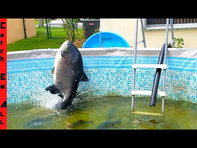 FISH JUMPS OUT of POOL on CAMERA with SHAMU!