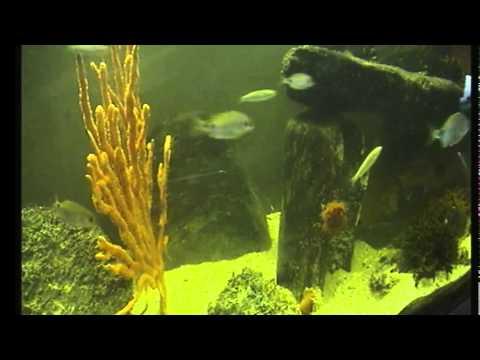 Daylight fishtank streaming test
