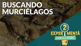 Buscando murciélagos | Experimenta, ciencia de niñ@s