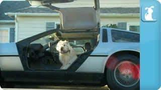 Barklemore Pet Shop - Behind the Scenes - Macklemore - Thrift Shop