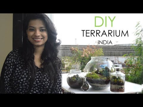 Terrarium Diy India L Miniature Garden In Glass Bowl L Indoor Closed