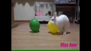 Repeat youtube video White Rabbit Humping Balloons - FUNNY VIDEO