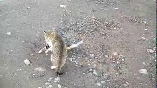 схватка котов на смерть .вот как дерутся Армянские коты.  новинка 2018