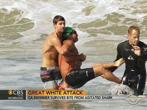Great white shark attack: California swimmer survives bite