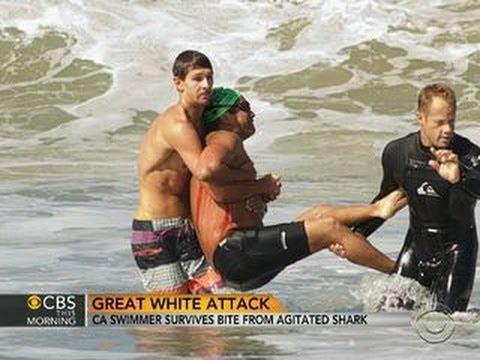 Thumbnail: Great white shark attack: California swimmer survives bite