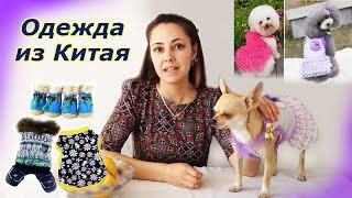 Обзор одежды из Китая для собак.