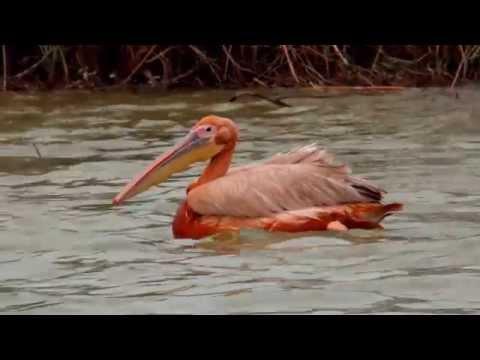 Trip to Senegal Part 2, 2014. Saint Luis, Bandia, Djoudj in 4K and Full HD