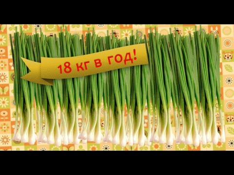 Зеленый борщ, рецепты с фото на RussianFoodcom 39