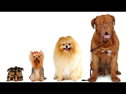 The Dog | World's Top 10 Dog Breeds for Americans in 2018