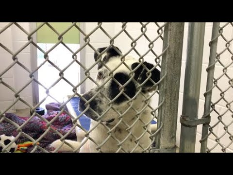 Make A Difference: Ocean City Humane Society