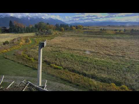 Osprey Nest - Charlo Montana Cam 10-23-2017 13:42:22 - 14:42:22