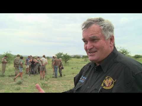 RHINO DEHORNING - SOUTH AFRICA