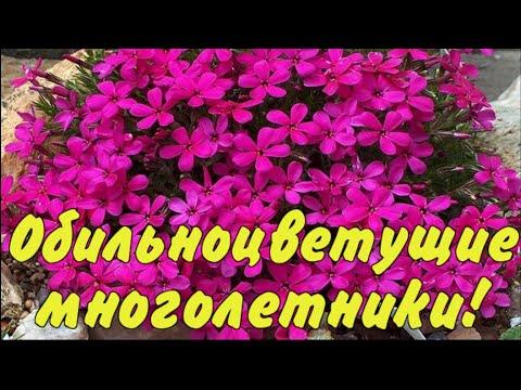 Вопрос: Есть ли общий признак для садовых цветов размножающихся самосевом?