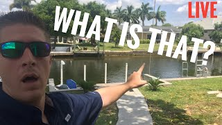 Look What I Found In My Backyard! - LIVE CHAT
