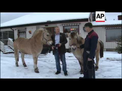 Foal festival at jj horses in norway 2016 doovi - The house on the rock the ultimate refuge in a norwegian fjord ...