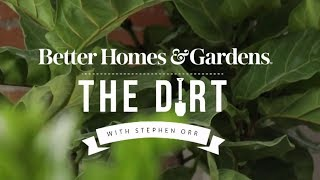 Decorating with Houseplants | The Dirt | Better Homes & Gardens