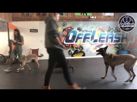 sofie! Best dog trainers VA| E-collar training| Obedience training