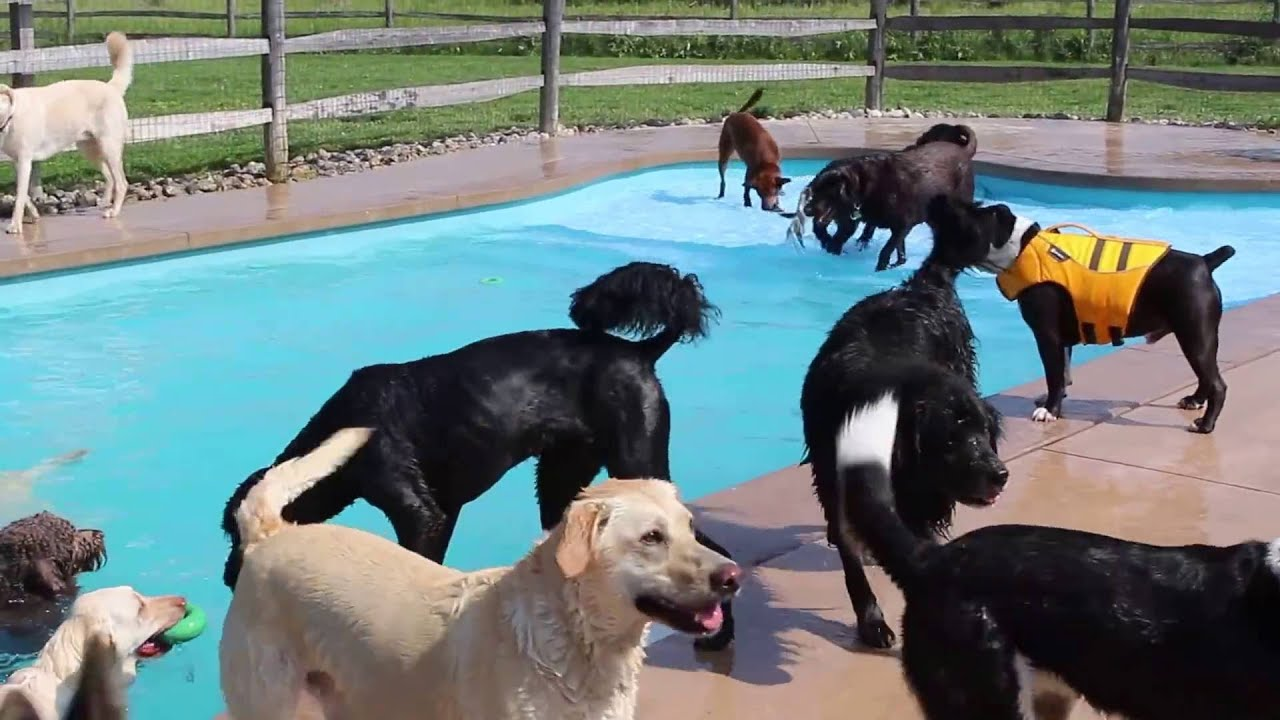 Summer Fun Begins At Lucky Puppy Youtube