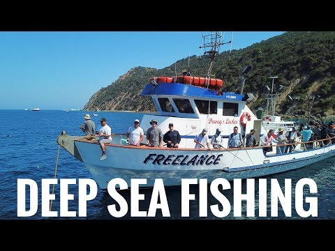 Deep Sea Fishing In California! || Freelance Ocean Tours