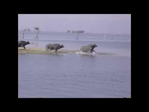 1977 Hwange National Park - Elephants - Reel #60