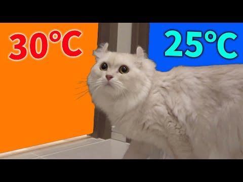 猫は30℃と25℃の部屋があったらどっちに行くの?