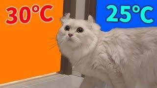 猫は30℃と25℃の部屋があったらどっちに行くの?...