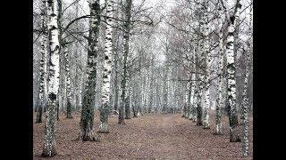 Смотреть Евгений Дятлов - Я в весенем лесу пил березовый сок онлайн