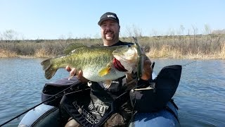 14lb 6oz Largemouth Bass caught on a Deps Slide Swimmer 250 from the float tube