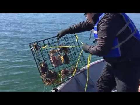 Crabbing in Tillamook Bay