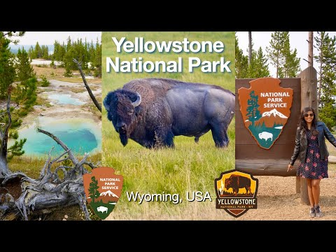 Yellowstone National Park Part1 | West Thumb Geysers | Wild Bison | Hot Spring and Geysers | USA