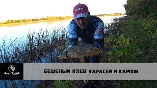 Рыбалка в Астрахани бешенный клев карася и сазана речной карп
