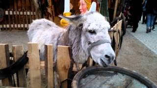 Hilarious Donkeys