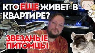 Звездные питомцы. Виктор Щежин-Бурко и его животные. В гостях Лина Вет.