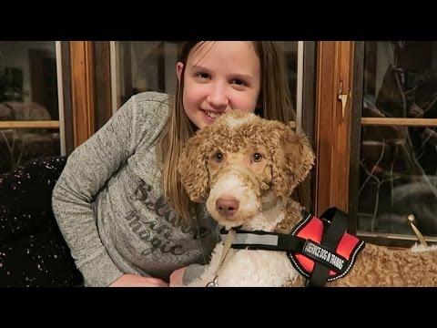 Meet Chuck - A Diabetes Alert Dog at HSBC