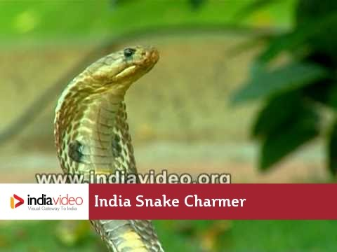 Snake Charmer, Shamsuddin: The Performer of Wonders
