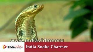 India Snake Charmer -  Cobra Snake Tricks!