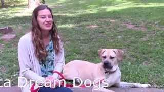 Atlanta Home Dog Training Laurel Testimonial