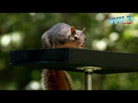 Un écureuil très mâlin !