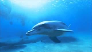 Ocean Life. Жизнь в океане