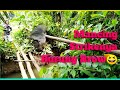 Kejadian Lucu Mancing Gabus Malah Strike Burung  Mp3 - Mp4 Download
