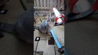 Кошка против Алисы и кошка кажется выиграла