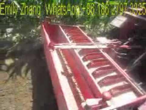 Garlic Plant Machine Garlic Planter Youtube