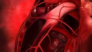 Genom - Human Body: Heart