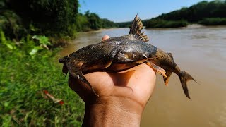 Cá hiếm sông Bé ✅